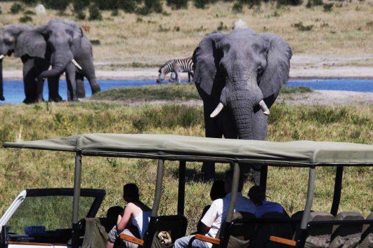 Safari & Animal Treks