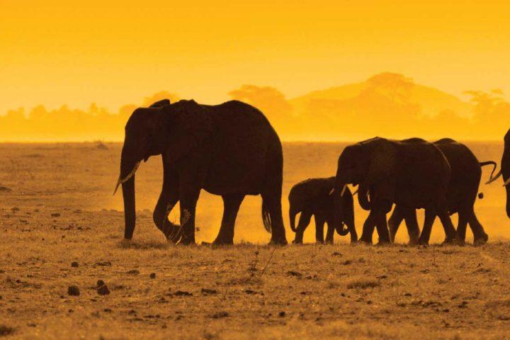 africa-kenya-elephants