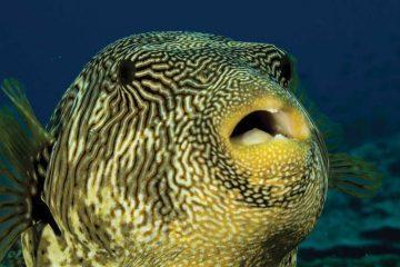 africa-mozambique-tropicalfish