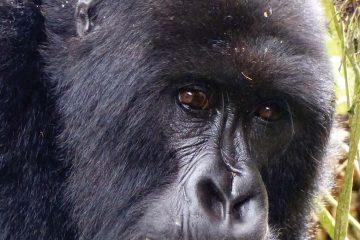africa-rwanda-gorilla-trek