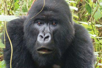 africa-rwanda-gorilla trek