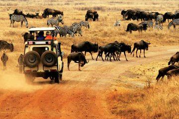africa-tanzania-serengeti national park-wildebeest-zebra-migration