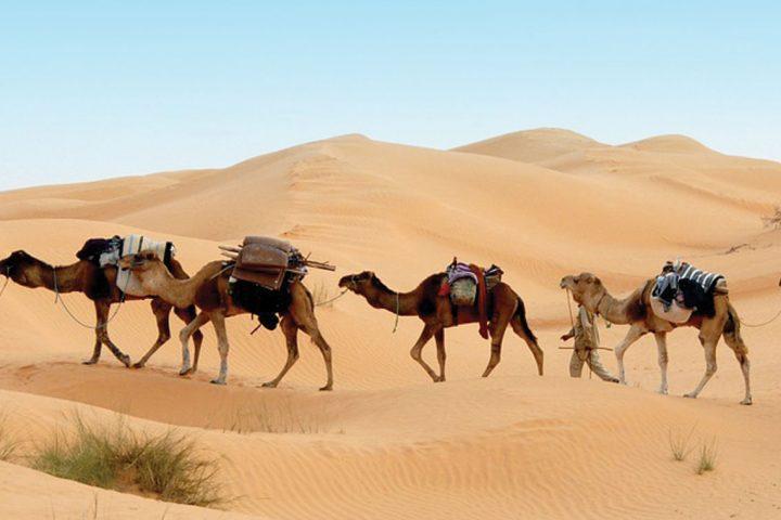 africa-tunisia-desert-camels