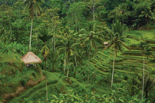 asia-indonesia-bali-rice fields
