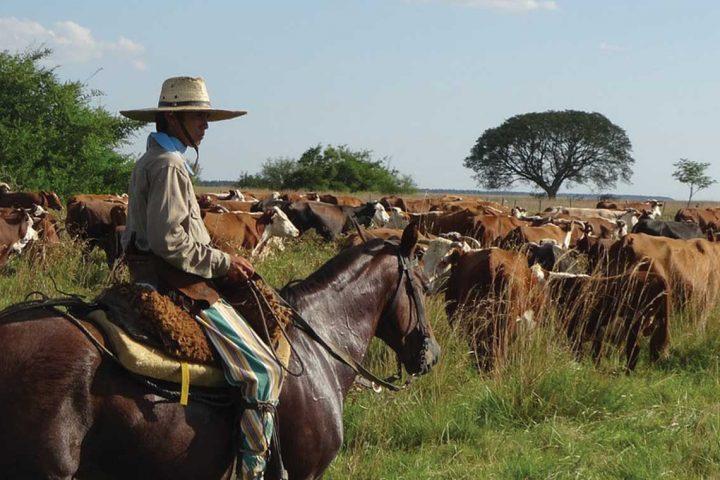 south america-argentina-gaucho-estancia