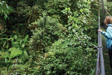 south america-peru-canopy walk