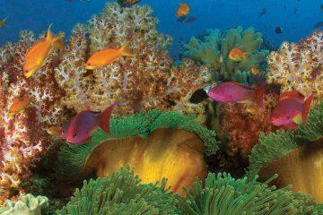 south pacific-fiji-reef-snorkeling