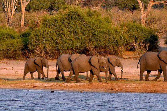 tour-africa-botswana-chobe-national-park-elephants-pixabay-1653100