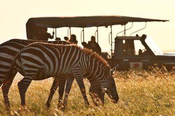 tour-africa-kenya-masai-mara-game-drives-zebra-skysafari-by-elewana