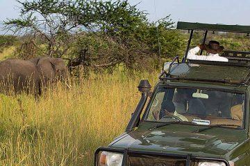 tour-africa-tanzania-serengeti-game-drives-elephant-skysafari-by-elewana